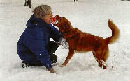 epilepsi hos hund